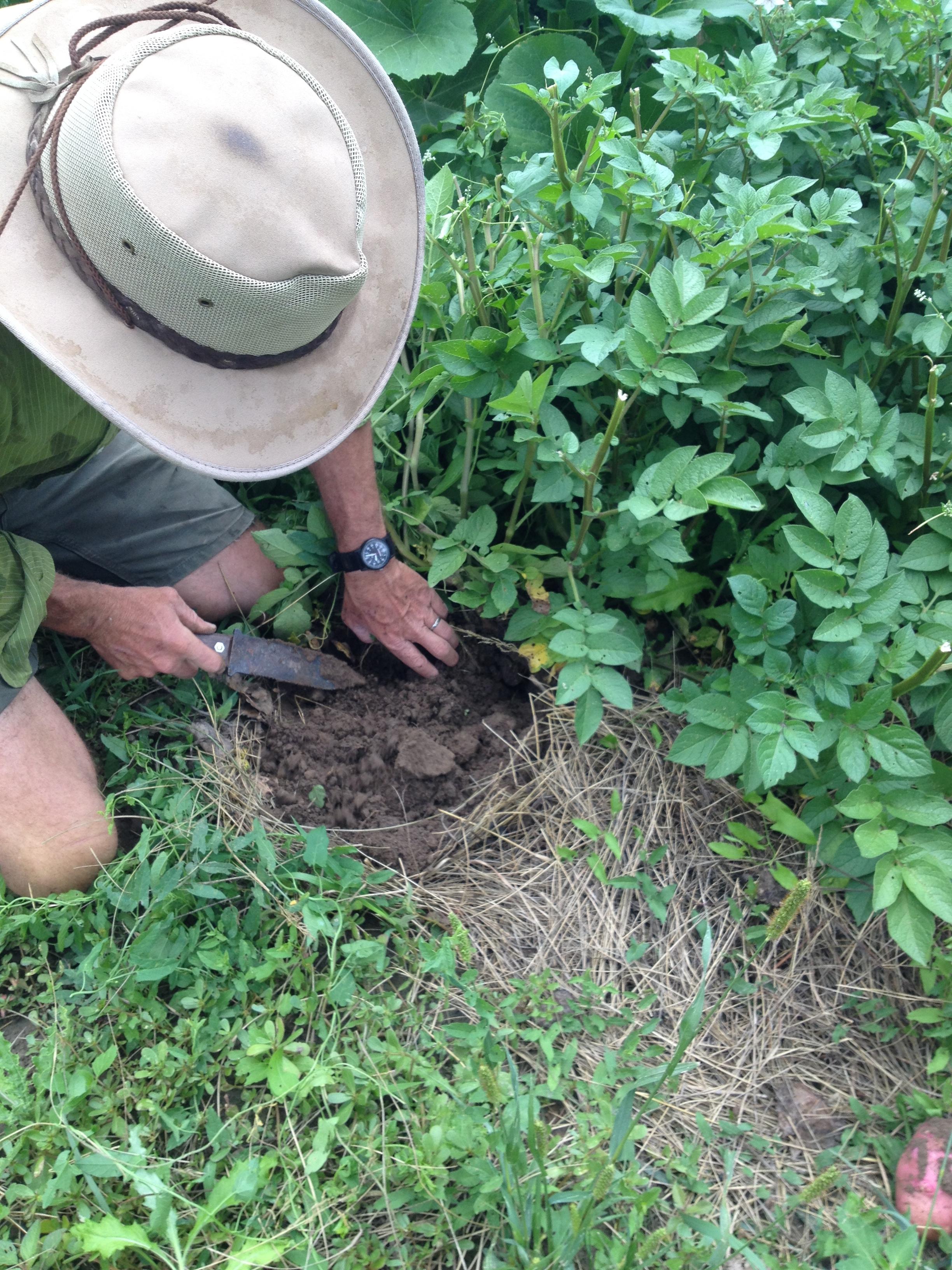 essay about gardening gardening karma compass val bourne the  gardening karma compass 5427 5428 5494