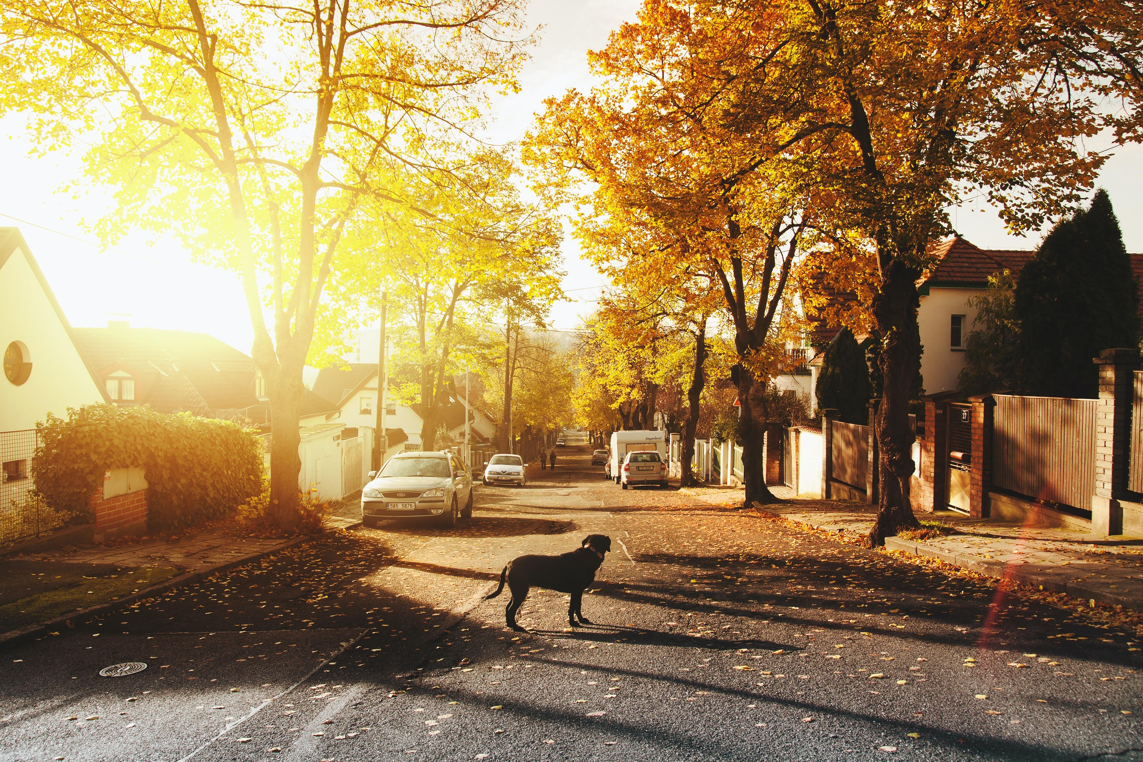 Affluent Suburban Neighborhood